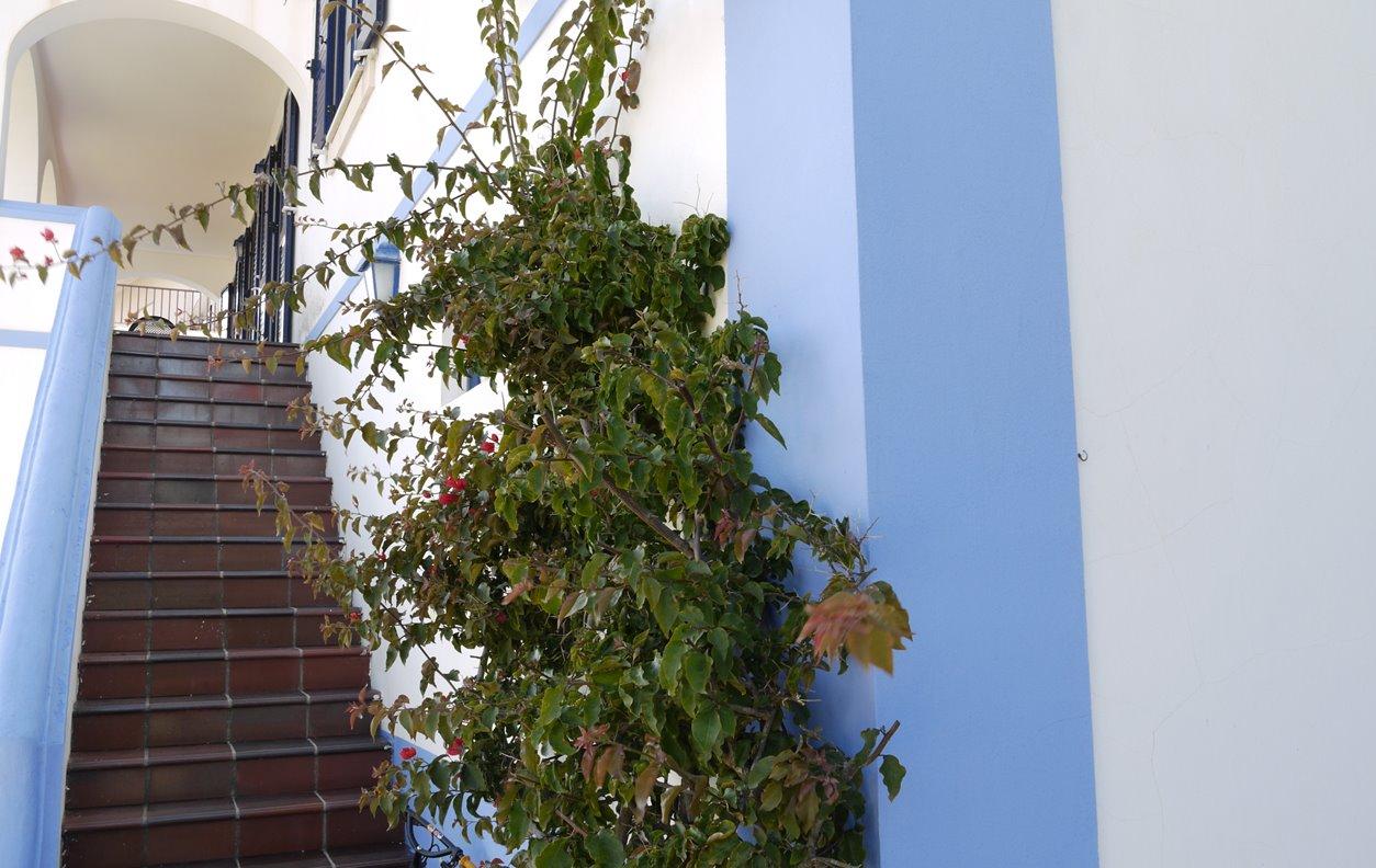 Casa de Férias com Vista Mar, Jardim, BBQ e Wi-Fi - Próximo Miradouro São Martinho do Poroto - 12833